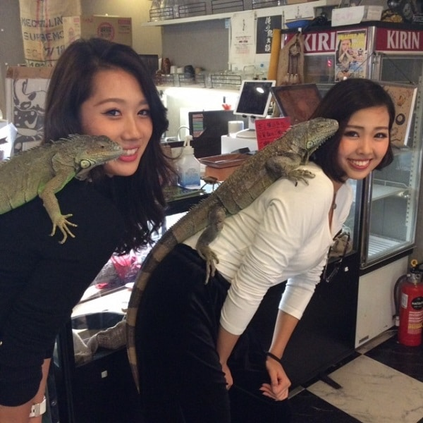 reptile-cafe-animal-bar-lezard-japon-2